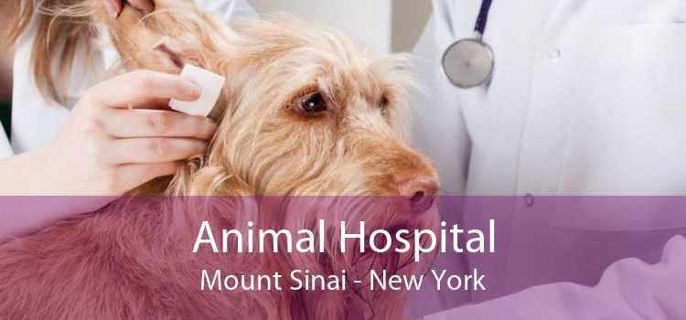 Animal Hospital Mount Sinai - New York