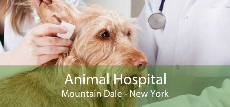 Animal Hospital Mountain Dale - New York