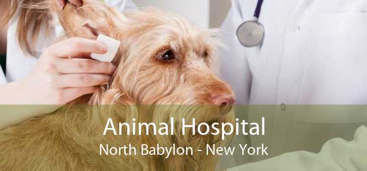 Animal Hospital North Babylon - New York