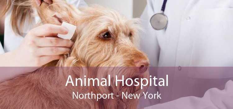 Animal Hospital Northport - New York