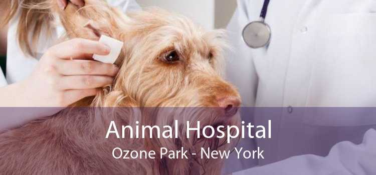 Animal Hospital Ozone Park - New York