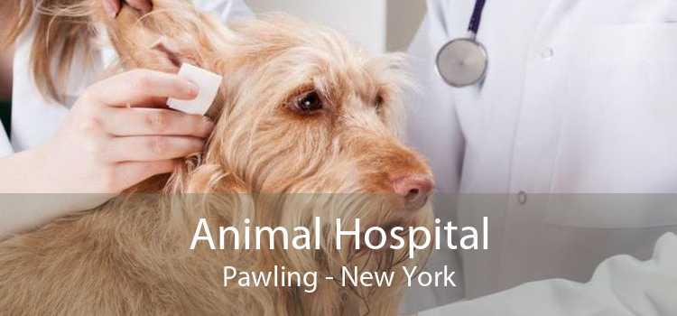 Animal Hospital Pawling - New York