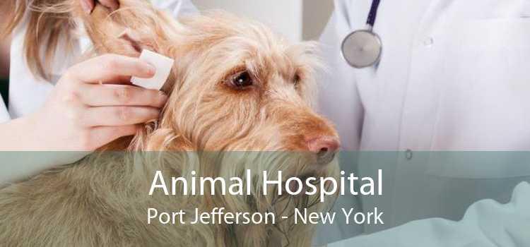 Animal Hospital Port Jefferson - New York