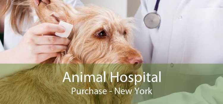 Animal Hospital Purchase - New York