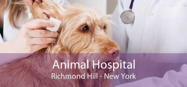 Animal Hospital Richmond Hill - New York