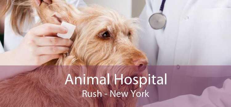 Animal Hospital Rush - New York