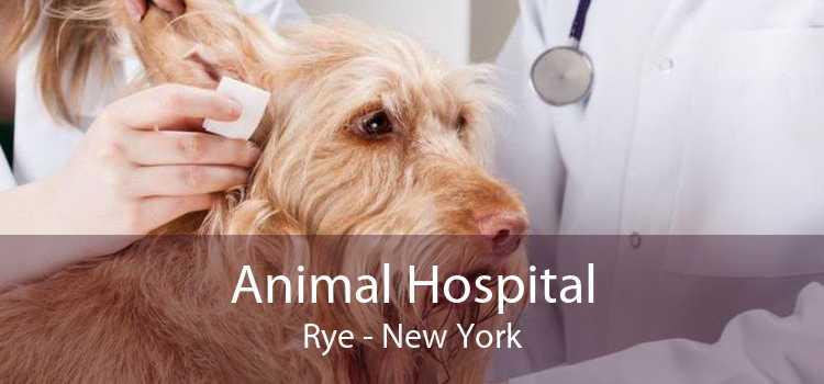 Animal Hospital Rye - New York
