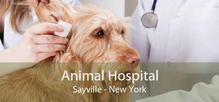 Animal Hospital Sayville - New York