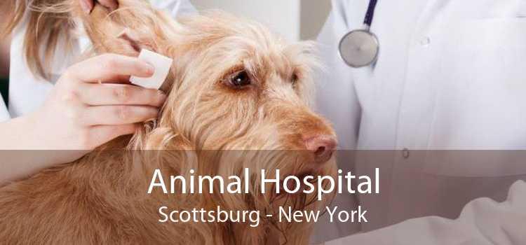 Animal Hospital Scottsburg - New York