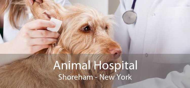 Animal Hospital Shoreham - New York