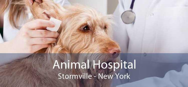 Animal Hospital Stormville - New York