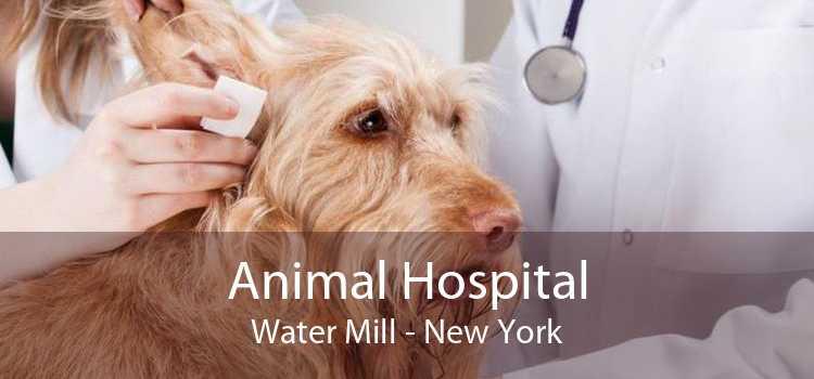 Animal Hospital Water Mill - New York