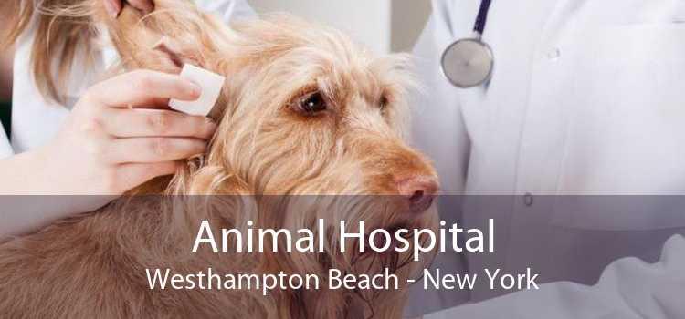 Animal Hospital Westhampton Beach - New York