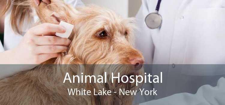 Animal Hospital White Lake - New York