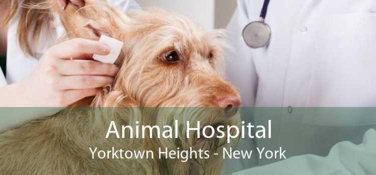 Animal Hospital Yorktown Heights - New York