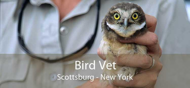 Bird Vet Scottsburg - New York