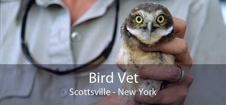 Bird Vet Scottsville - New York