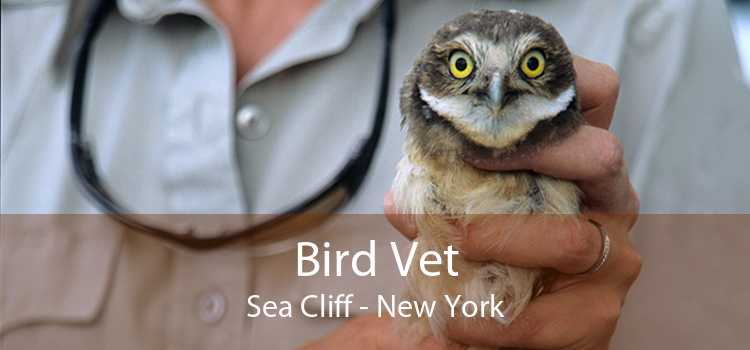 Bird Vet Sea Cliff - New York