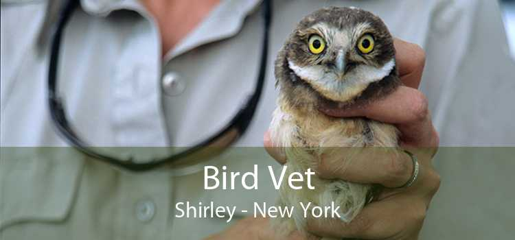 Bird Vet Shirley - New York