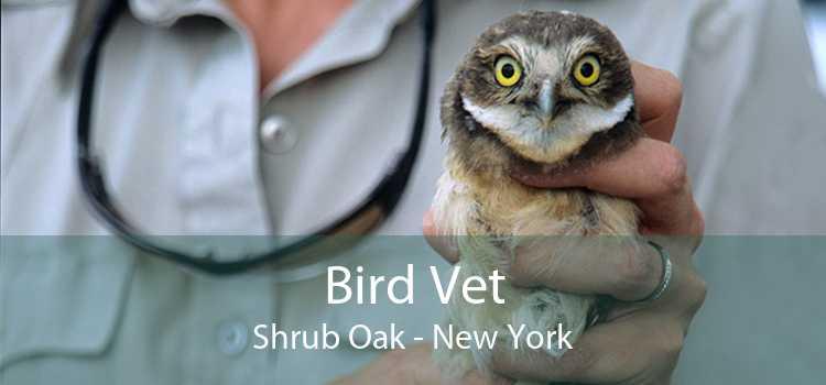 Bird Vet Shrub Oak - New York