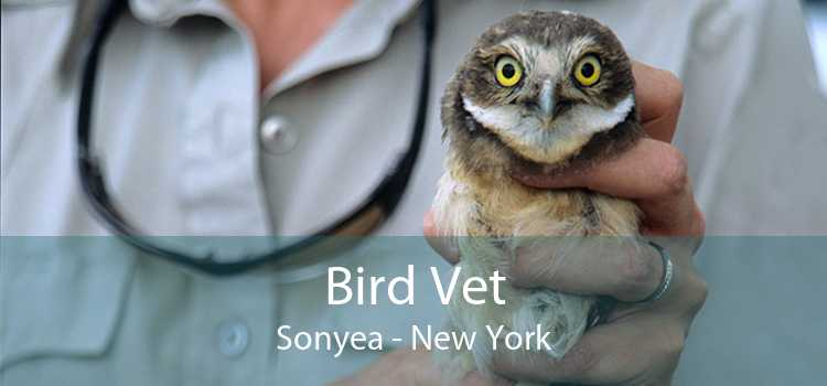 Bird Vet Sonyea - New York