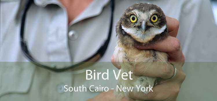 Bird Vet South Cairo - New York