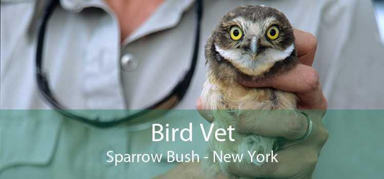 Bird Vet Sparrow Bush - New York