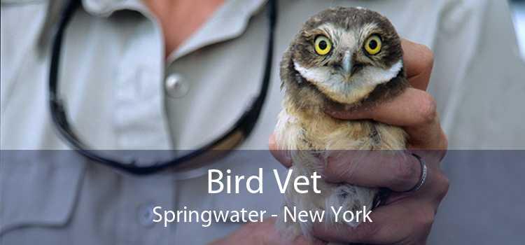 Bird Vet Springwater - New York
