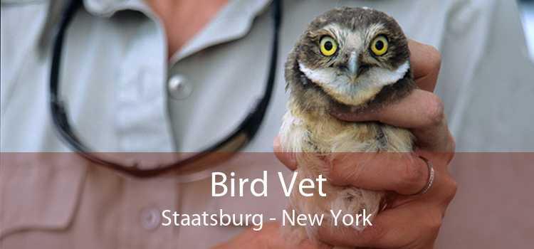 Bird Vet Staatsburg - New York