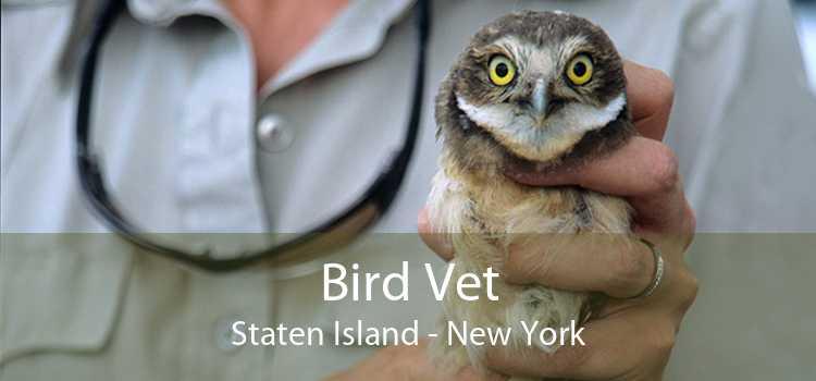 Bird Vet Staten Island - New York