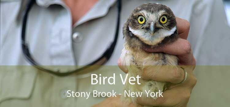 Bird Vet Stony Brook - New York