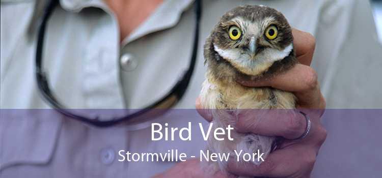 Bird Vet Stormville - New York