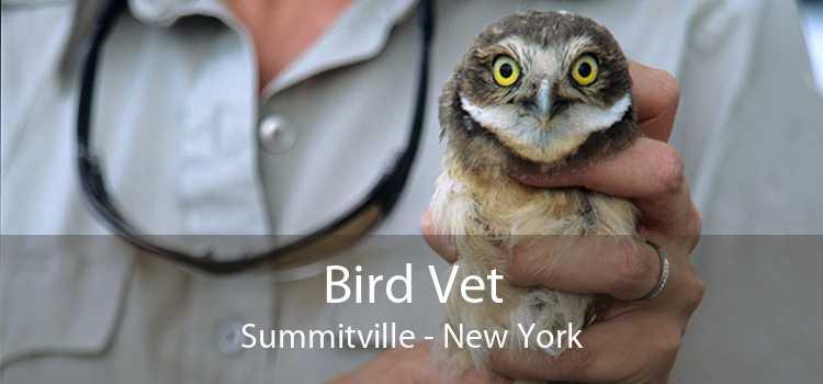 Bird Vet Summitville - New York