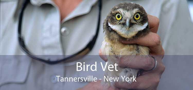 Bird Vet Tannersville - New York