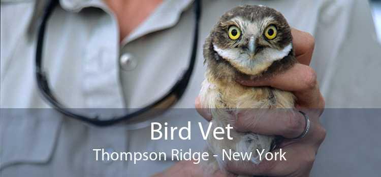 Bird Vet Thompson Ridge - New York