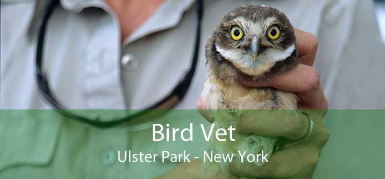 Bird Vet Ulster Park - New York