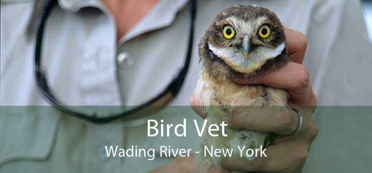 Bird Vet Wading River - New York