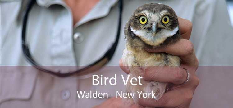 Bird Vet Walden - New York