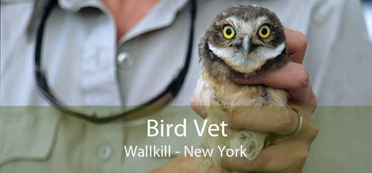 Bird Vet Wallkill - New York