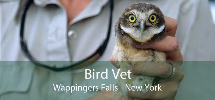 Bird Vet Wappingers Falls - New York
