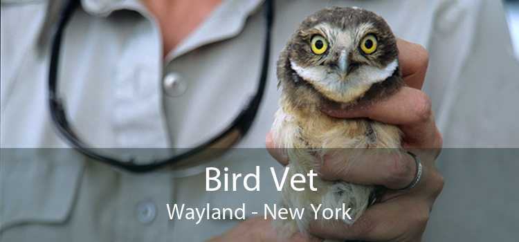 Bird Vet Wayland - New York