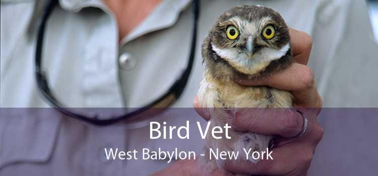 Bird Vet West Babylon - New York