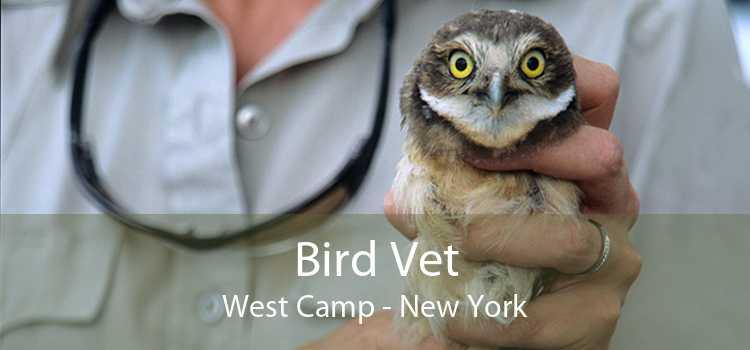 Bird Vet West Camp - New York