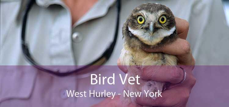 Bird Vet West Hurley - New York