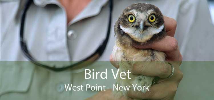 Bird Vet West Point - New York