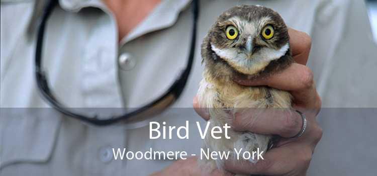 Bird Vet Woodmere - New York