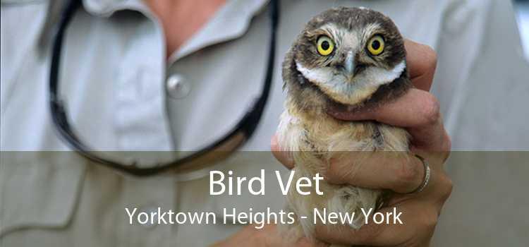 Bird Vet Yorktown Heights - New York