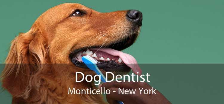 Dog Dentist Monticello - New York