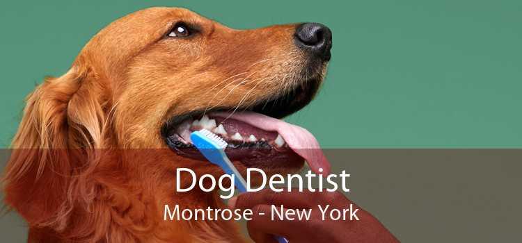 Dog Dentist Montrose - New York