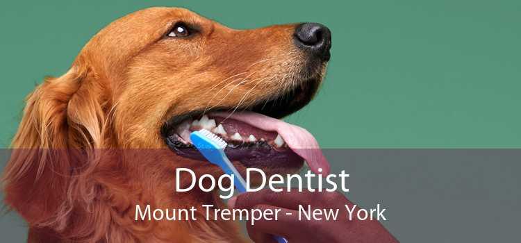 Dog Dentist Mount Tremper - New York